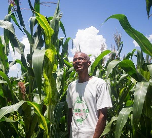 Climate-smart agriculture makes economic sense