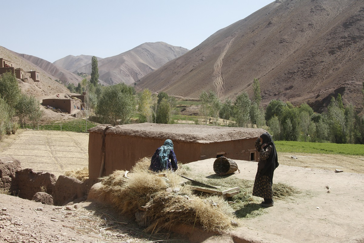 Women hand-threshing wheat in Bamyan Province, Afghanistan.